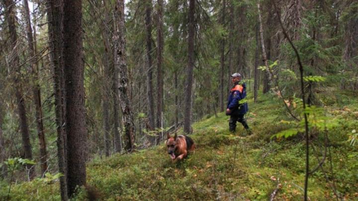 В Приморском районе спасатели ищут потерявшегося в лесу пенсионера