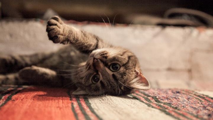 В Архангельске пять кошек и собака устроили пожар в деревянном доме