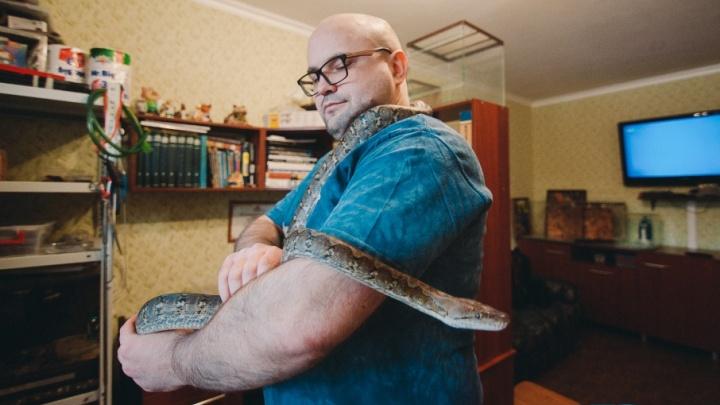 Длиной под два метра, ест раз в 10 дней, может чихать: история тюменца, который живет со змеей