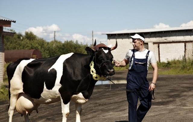 В новом «Му-музее» в Холмогорах дадут подоить корову и попробовать парное молоко