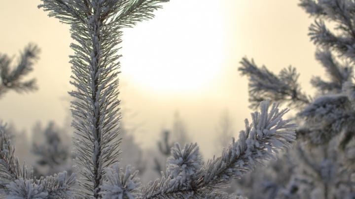 Закружит в вихре: в Самарскую область придет рождественская метель