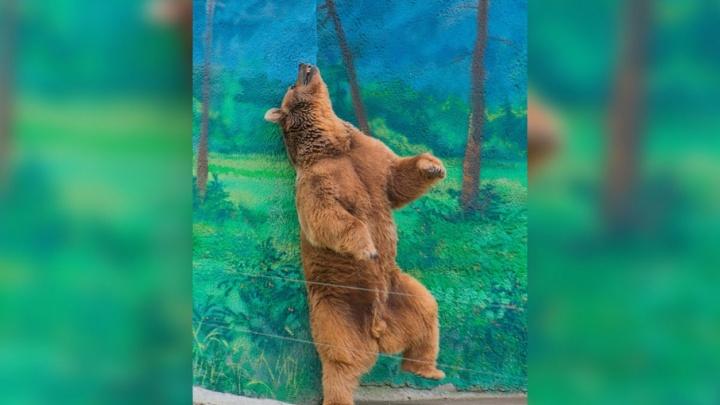 Попрощались до весны: бурые и гималайские медведи в ростовском зоопарке впали в спячку