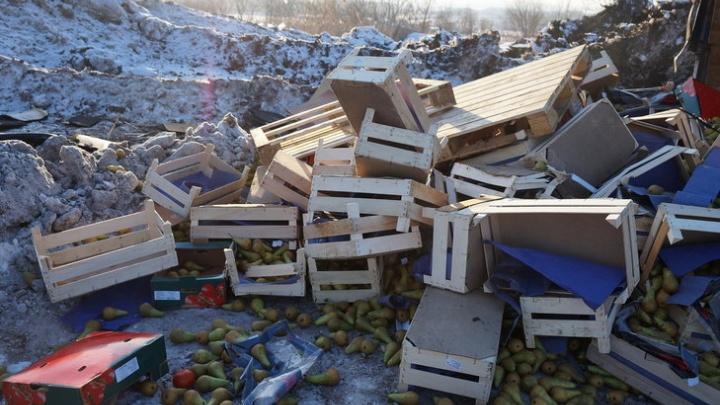 В Самаре уничтожили тонну санкционных груш и почти 500 килограммов томатов