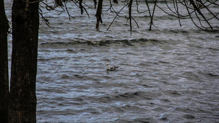 Не доплыл до берега: на Дону утонул рыбак