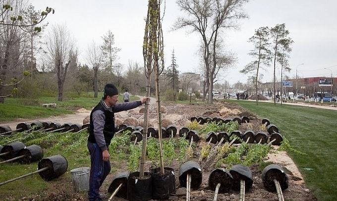 Строителей прокола на Тулака в Волгограде обязали возместить 6 из 28 засохших сосен