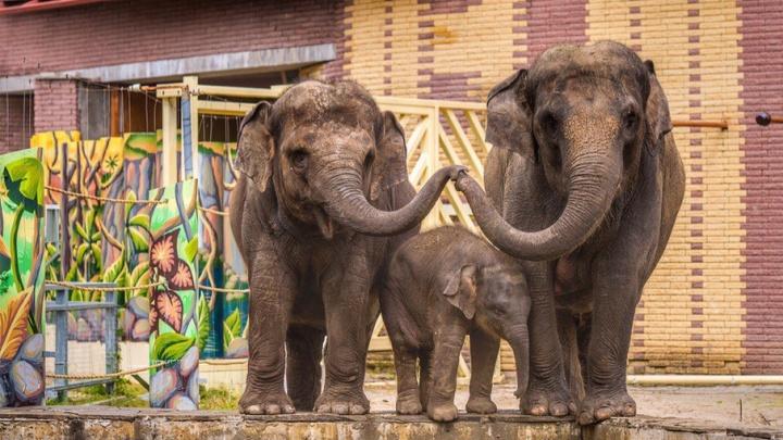 В летний дом в ростовском зоопарке переехали слоны