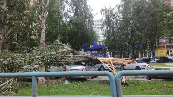 В Самаре шквалистый ветер повалил деревья на машины и сдул остановку