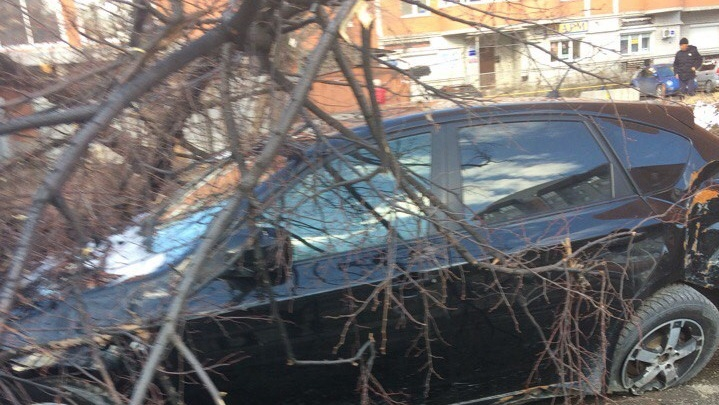 «Природа решила добить»: в Тюмени дерево упало на автомобиль, который уже был разбит