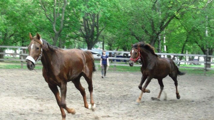 В Самаре конный клуб выселят из парка Металлургов по решению суда