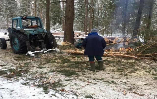 В Ярославской области объявили охоту на «черных лесорубов»