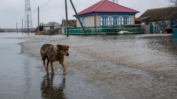 Страшный паводок отпустил из своей власти несколько поселков Волгоградской области