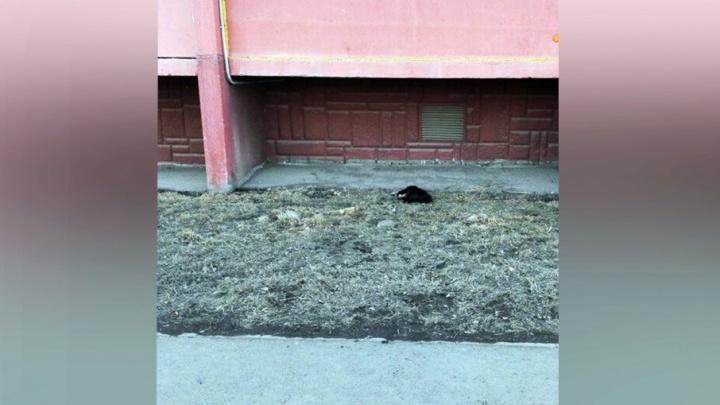 «Дети плакали»: с балкона девятого этажа в «Парковом» сбросили кошку
