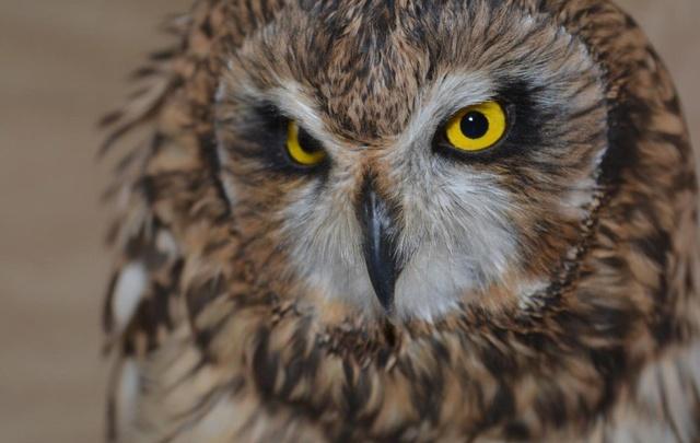 Ростовчанка спасла сову от поклонников Гарри Поттера