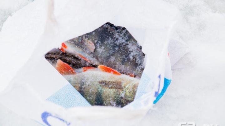 В Самарской области увеличат штрафы за нелегальную продажу рыбы и раков