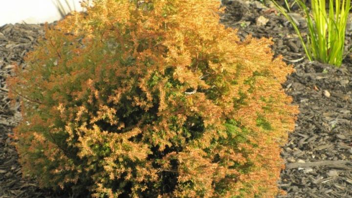Архангелогородцы выиграли тысячу деревьев для Аллеи Славы