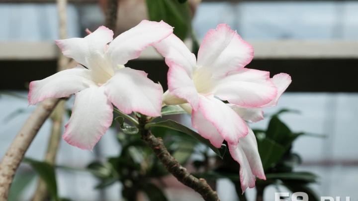 Гигантская кувшинка и цветущие кактусы: окунаемся в лето в ботаническом саду ПГНИУ