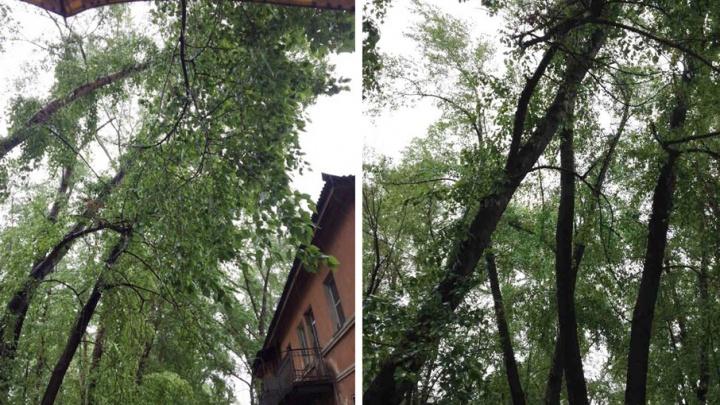 Ветер сеет панику: челябинцам отказывают в спиле опасных деревьев из-за нехватки денег