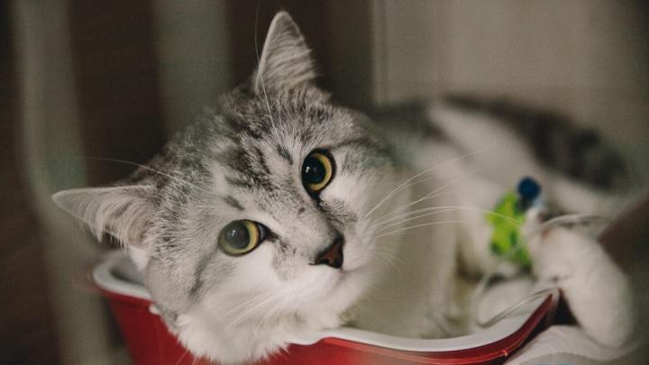 Онкология животных: правда ли, что кошки и собаки «копируют» болезни хозяев, и каким раком они чаще всего болеют