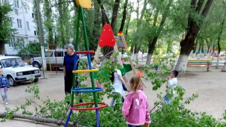 На детскую площадку в Волгограде рухнула огромная ветка
