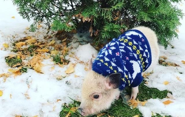 Черепушка, мини-пиги и бездомные коты и что еще есть в инстаграме про Самару