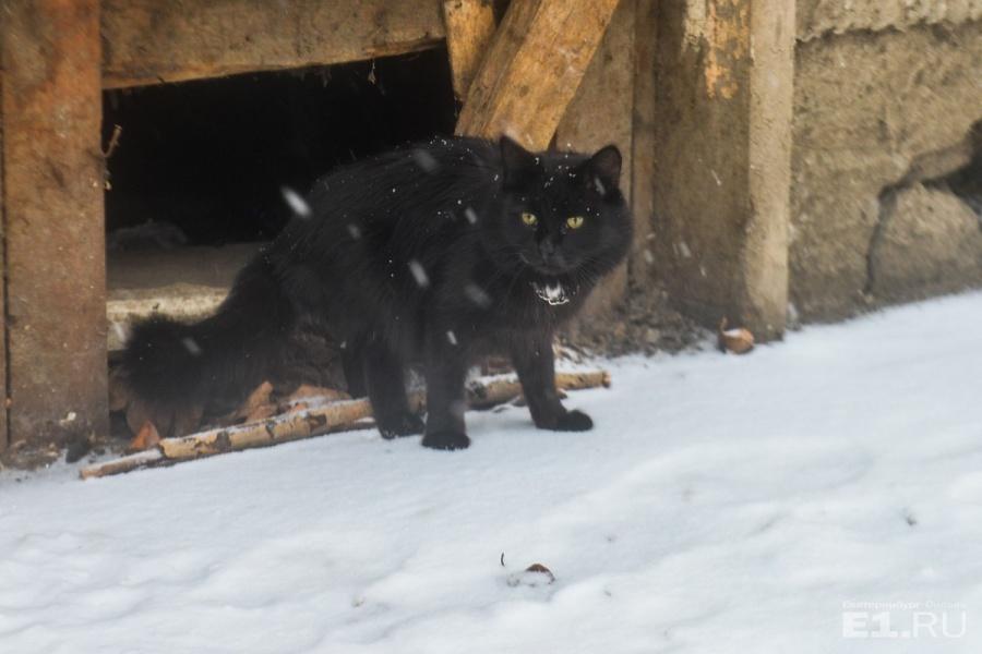 Из кривого дома выглянул чёрный кот с цепочкой на шее