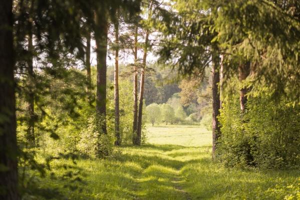 Водитель спрятался в лесу