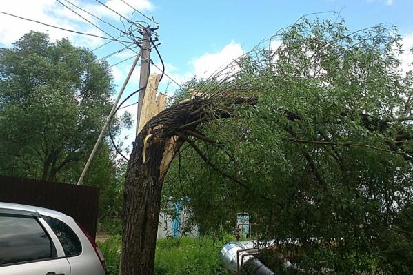 Ветром в Ярославле сегодня повалило не одно дерево - сообщения поступают с разных районов