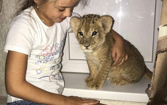 Футболист Федор Кудряшов подарил своим детям львенка