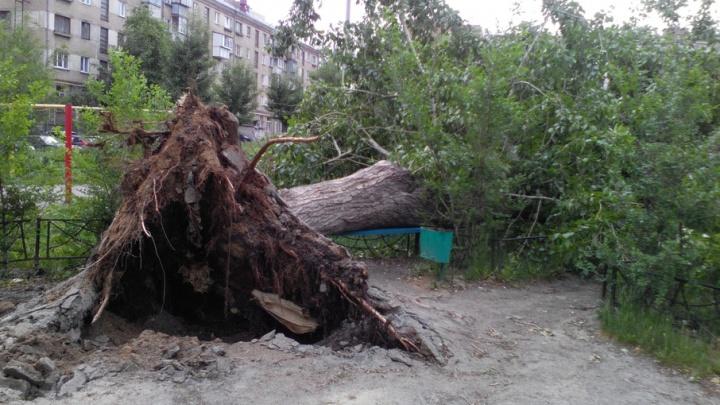 Челябинцы пожаловались на неубранные деревья после субботнего шторма