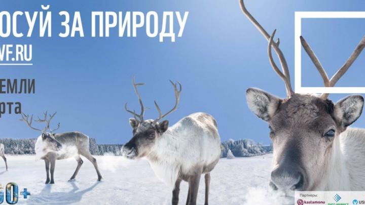 Архангельский ЦБК стал партнером всемирной акции WWF «Час Земли — 2018»