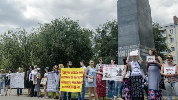В Ростове на пикет в защиту животных вышло только несколько десятков активистов