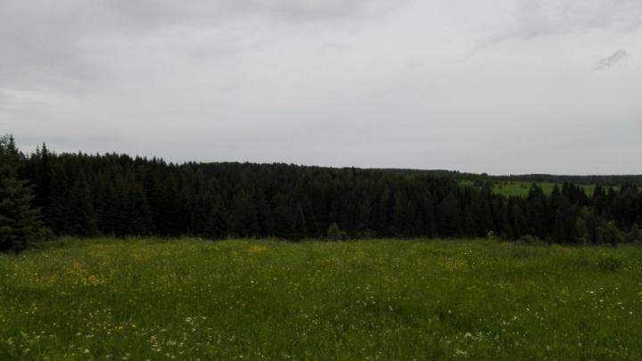 Заблудившиеся в лесу под Усольем дед с внуком нашлись