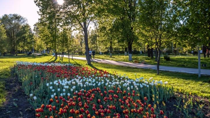 В Струковском саду вырубят сорные деревья