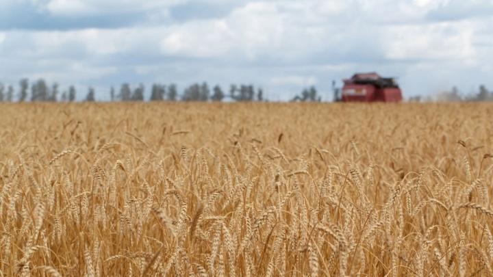 В Самарской области собрали первый миллион тонн зерна