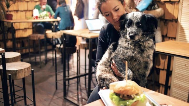 Хвостатый ревизорро: в какие кафе Ярославля пустят с собакой