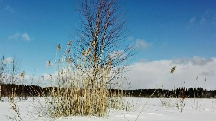 Южный ветер и слабый мороз: северян на выходных ждет отличная погода