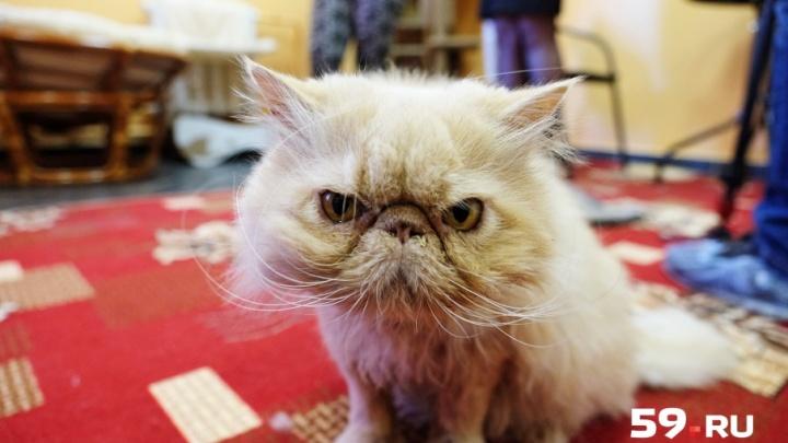 Пермь назвали одним из самых «кошачьих» городов страны