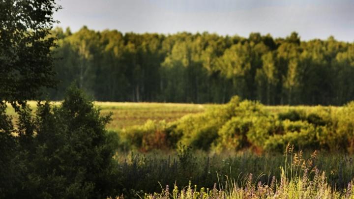 Южноуральские леса разрешат вырубать для стройки туристических центров и дорог