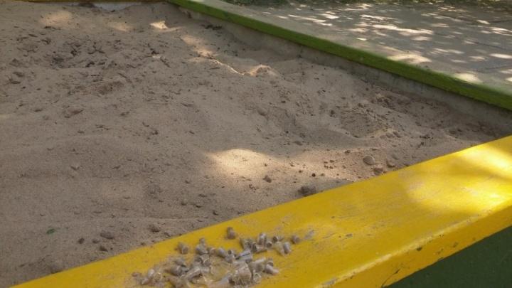В тольяттинский двор для детей завезли песок со стеклом