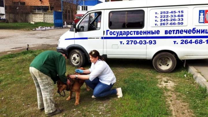В Ростове можно бесплатно сделать своим питомцам прививки от бешенства