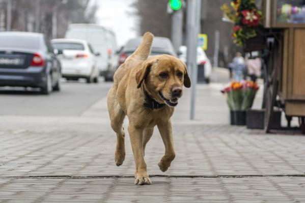 Перед ЧМ власти Ростова должны будут убрать с улиц бездомных животных