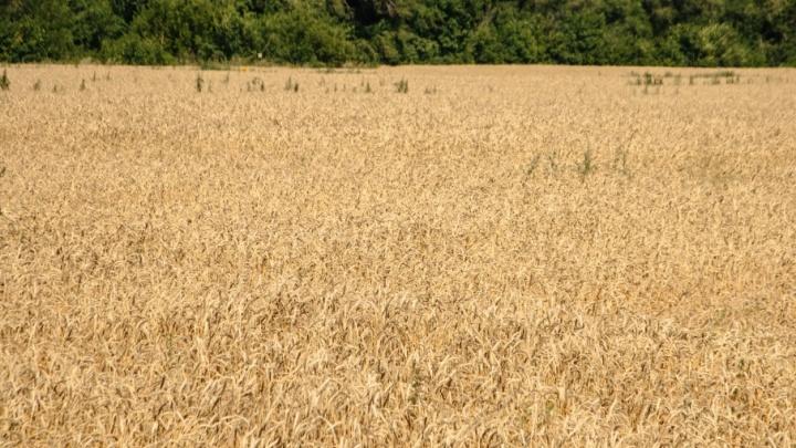 Самарская область поделится зерном с северными регионами России