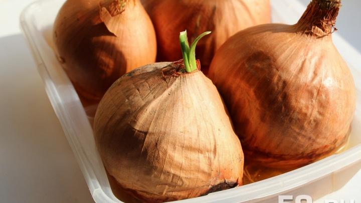 В Прикамье в два раза выросли цены на картофель, капусту и лук