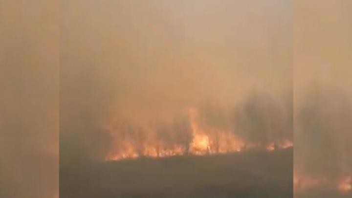 Трассу заволокло дымом: в лесополосе под Самарой горела трава