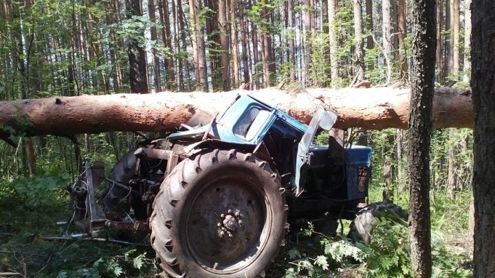 В Челябинской области дровосек погиб под рухнувшим деревом