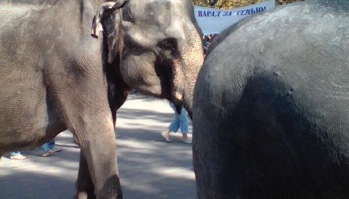 Кормление слонов и космическая музыка Ханга: как развлечься в Ростове в выходные