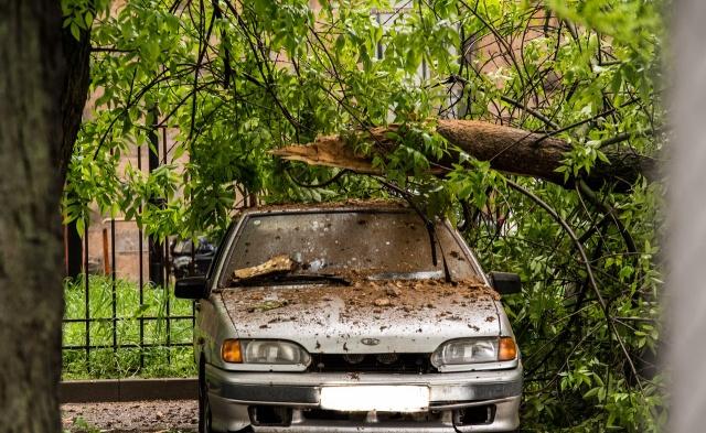 Упало дерево на Горького