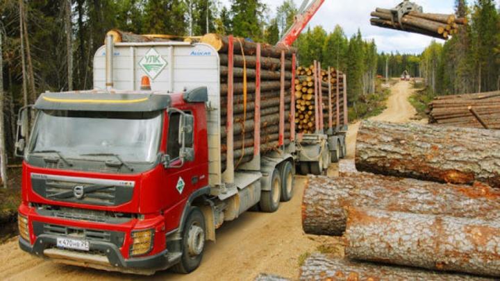 Именем Путина: предприниматели из Устьян развернули битву за лес