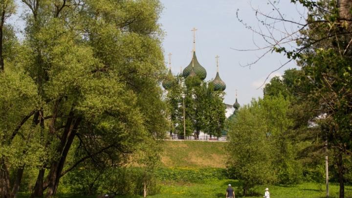Подзеленье заставят арт-объектами. Последняя прогулка по нетронутому лесу в центре города