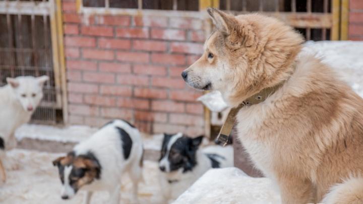 По 2500 рублей на особь: в Самарской области насчитали почти 28 тысяч бездомных животных